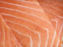 Salmon filet Stock Image