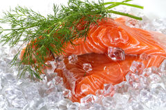 Salmon fillet with dill Royalty Free Stock Image