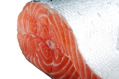 Salmon fish Stock Image