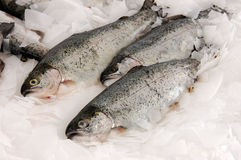 Free Salmon Fish Stock Photography - 13362212