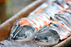 Salmon fish. Fresh cuts of salmon fish Stock Photography