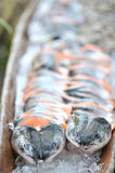 Salmon fish. Fresh cuts of salmon fish Stock Images