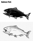 Fish vector by hand drawing. Salmon fish art highly detailed in line art style.Fish vector by hand drawing.Fish tattoo on white background Stock Image