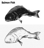 Fish vector by hand drawing. Salmon fish art highly detailed in line art style.Fish vector by hand drawing.Fish tattoo on white background Stock Images