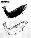 Fish vector by hand drawing. Salmon fish art highly detailed in line art style.Fish vector by hand drawing.Fish tattoo on white background Royalty Free Stock Images