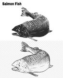 Fish vector by hand drawing. Salmon fish art highly detailed in line art style.Fish vector by hand drawing.Fish tattoo on white background Royalty Free Stock Image