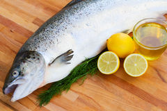 Salmon fish close up Royalty Free Stock Photo