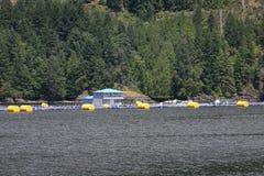 Salmon Fish Farm, costa della Columbia Britannica Fotografie Stock
