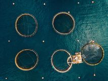 Salmon fish farm with floating cages. Aerial view Stock Photos