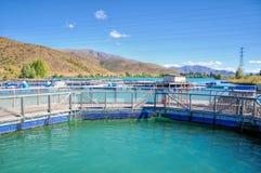 Salmon Fish farm , New Zealand Royalty Free Stock Photo
