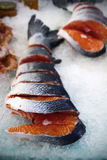 Salmon fish in fish shop Stock Photography