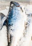 Salmon fish on ice at the market Stock Photos