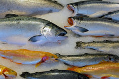 Salmon Fish on Ice in Wet Market Stock Images