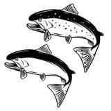 Salmon fish illustration on white background. Design element for logo, label,emblem, sign. Vector illustration Royalty Free Stock Photos