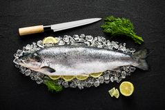 Salmon fish and ingredients on ice on a black stone table. Top view Stock Photography