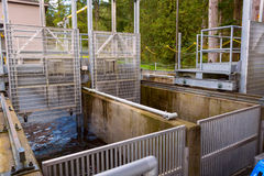 Salmon Fish Ladder Stock Photo