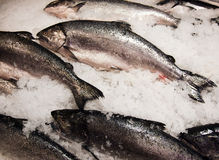 Salmon at Fish Market Royalty Free Stock Image