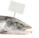 Salmon fish with price tag Stock Images