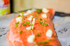 Salmon Fish Stock Photo