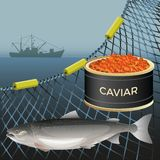 Salmon fish set stock illustration
