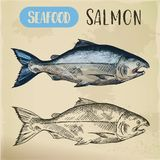 Salmon fish sketch. Hand drawn seafood for menu. Signboard with sketch of salmon fish or pacific ocean gorbuscha. Hand drawn seafood for restaurant menu or sport Stock Image