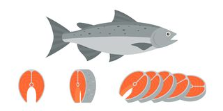 Salmon fish and sliced of salmon fillet steak. Illustration, flat design vector Royalty Free Stock Images
