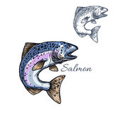 Salmon fish vector isolated sketch icon Stock Photos