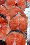 Salmon fish vivid slices in a row Stock Photos
