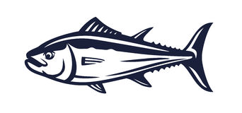 Salmon fish on white. Background vector illustration Royalty Free Stock Photos