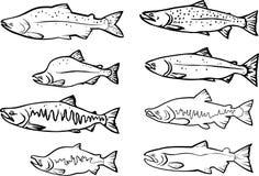 Salmon fishes stock illustration
