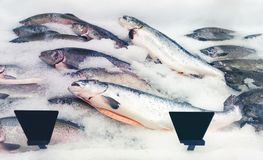 Salmon fishes assortment Royalty Free Stock Photography