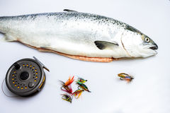 Salmon with flyfishing reel and flies. Salmon next to flyfishing reel and flies Royalty Free Stock Images