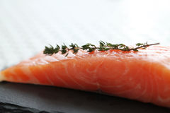 Salmon. Food. Delicious slice of salmon Stock Photography
