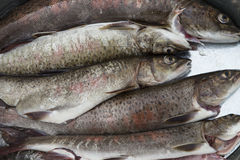 Salmon in the form of a catch. Royalty Free Stock Images
