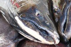 Salmon Fresh Fish travado imagens de stock