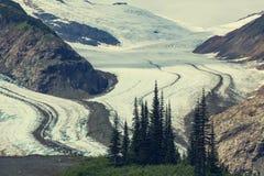 Salmon Glacier Royalty-vrije Stock Foto