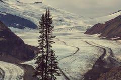 Salmon Glacier Royalty-vrije Stock Afbeelding