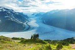 Salmon Glacier Stock Afbeelding