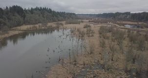Salmon Greenway Swans blanc clips vidéos