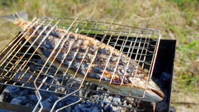 Salmon on the grill  Summer barbecue concept. stock video