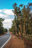 Salmon Gums on Toodyay Road Stock Photos