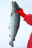 Salmon in hand outdoors Royalty Free Stock Images