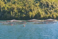 Salmon Hatchery, Los Lagos, Chile. Salmon hatchery at fjord in los lagos district, patagonia, chile stock images