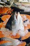 Salmon head Royalty Free Stock Images