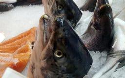Salmon Head su ghiaccio fotografie stock libere da diritti