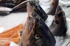 Salmon Head su ghiaccio fotografia stock