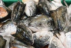 Salmon Heads Royalty Free Stock Photos