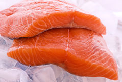 Salmon on Ice. Two fresh slice salmon as closeup on ice cubes Royalty Free Stock Image