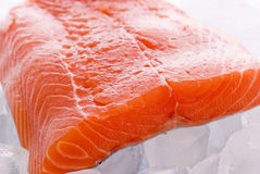Salmon on Ice. Fresh piece of salmon as closeup on ice cubes Stock Photos