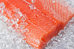 Salmon on ice Royalty Free Stock Images